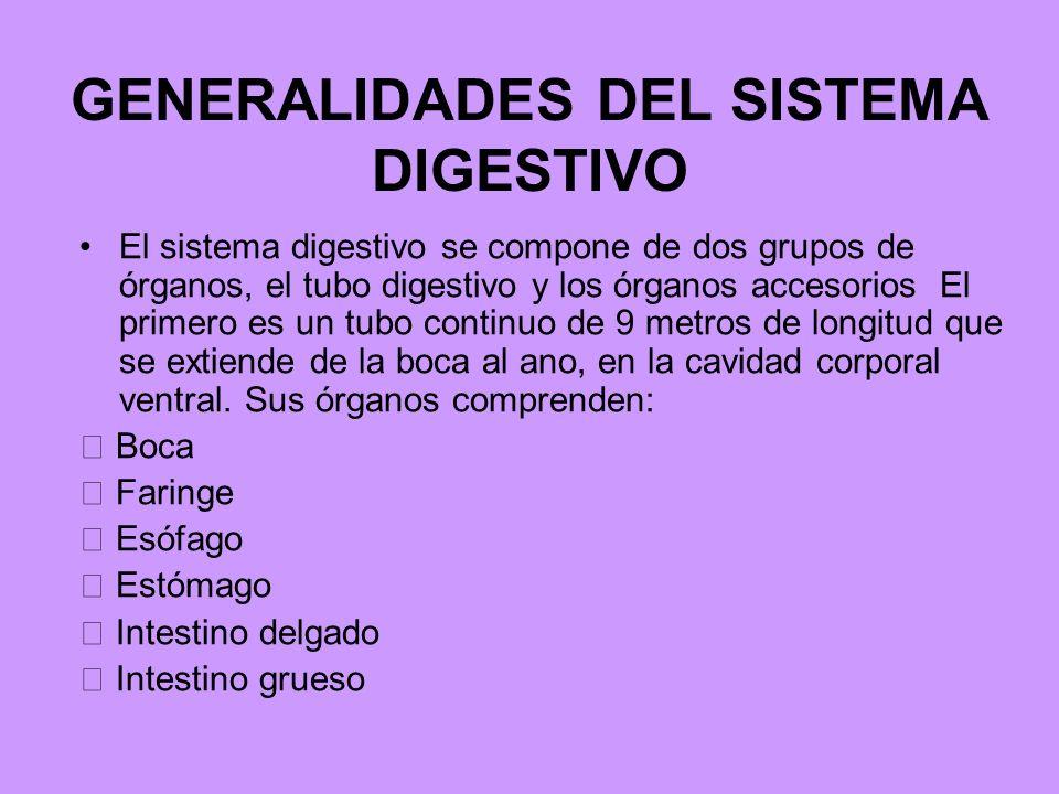 GENERALIDADES DEL SISTEMA DIGESTIVO El sistema digestivo se compone de dos grupos de órganos, el tubo digestivo y los órganos accesorios El primero es