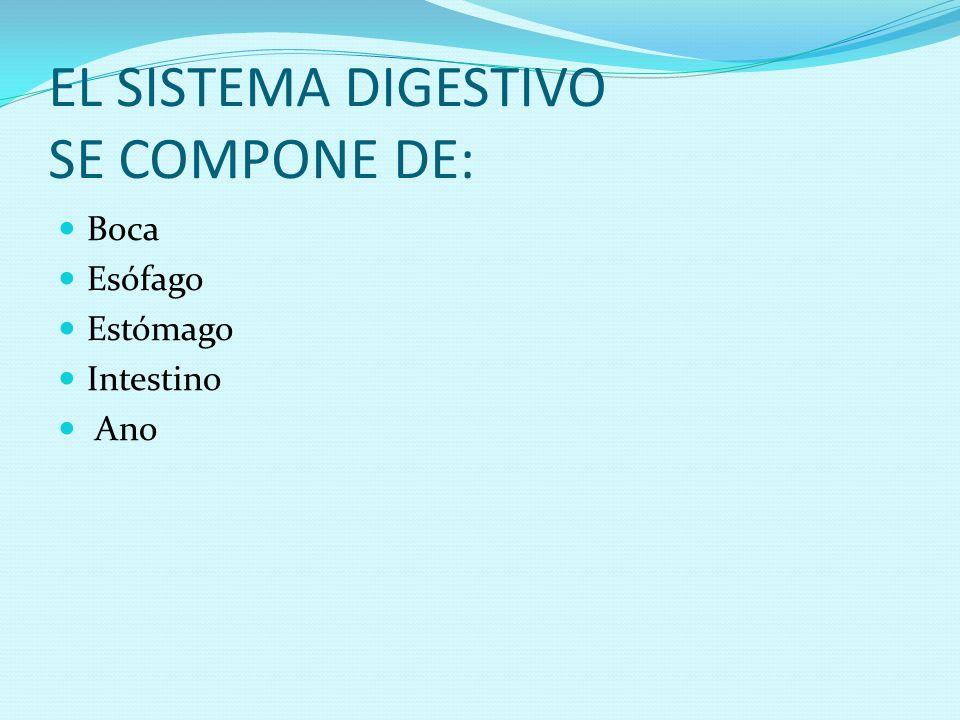 EL SISTEMA DIGESTIVO SE COMPONE DE: Boca Esófago Estómago Intestino Ano