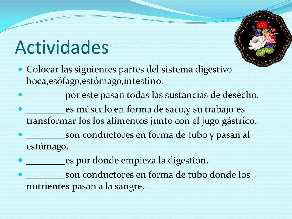 Actividades Colocar las siguientes partes del sistema digestivo boca,esófago,estómago,intestino. ________por este pasan todas las sustancias de desech