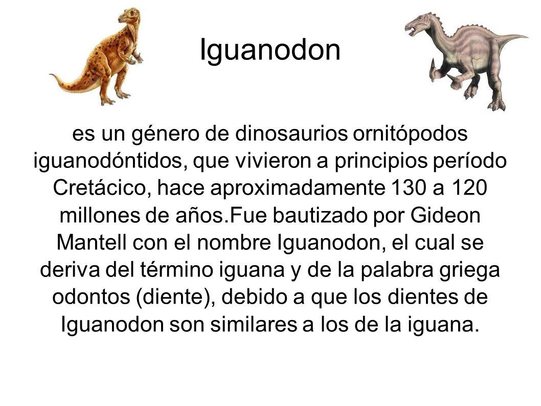 Iguanodon es un género de dinosaurios ornitópodos iguanodóntidos, que vivieron a principios período Cretácico, hace aproximadamente 130 a 120 millones