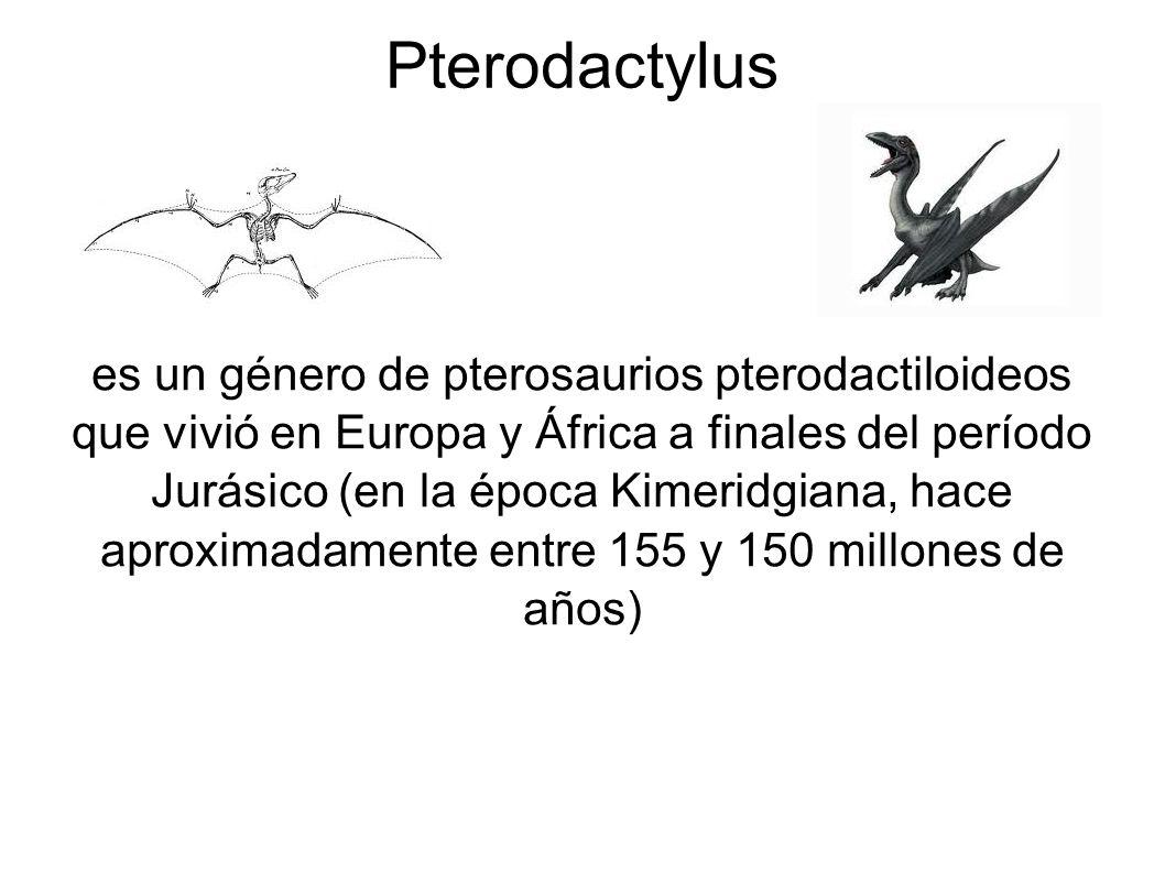 es un género de pterosaurios pterodactiloideos que vivió en Europa y África a finales del período Jurásico (en la época Kimeridgiana, hace aproximadam