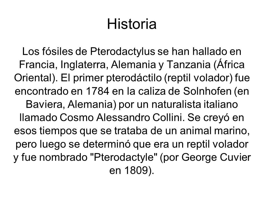 Historia Los fósiles de Pterodactylus se han hallado en Francia, Inglaterra, Alemania y Tanzania (África Oriental). El primer pterodáctilo (reptil vol