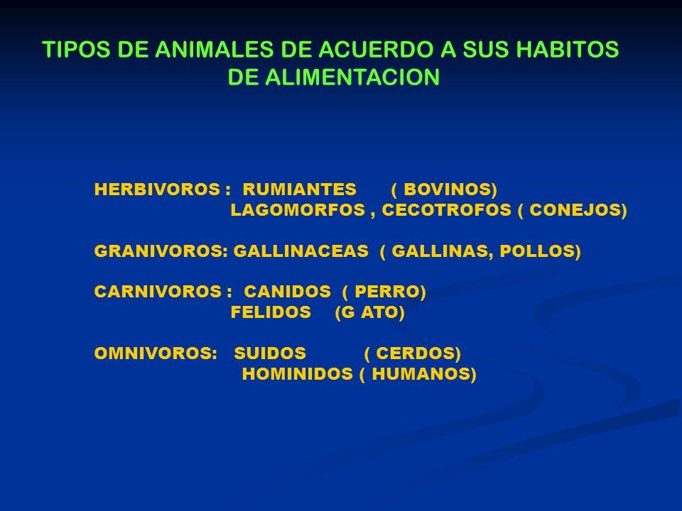 TIPOS DE ANIMALES DE ACUERDO A SUS HABITOS DE ALIMENTACION HERBIVOROS : RUMIANTES ( BOVINOS) LAGOMORFOS, CECOTROFOS ( CONEJOS) GRANIVOROS: GALLINACEAS