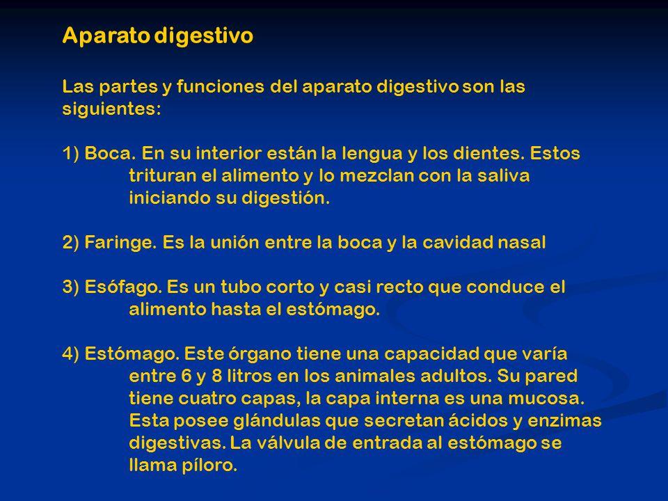 Aparato digestivo Las partes y funciones del aparato digestivo son las siguientes: 1) Boca. En su interior están la lengua y los dientes. Estos tritur