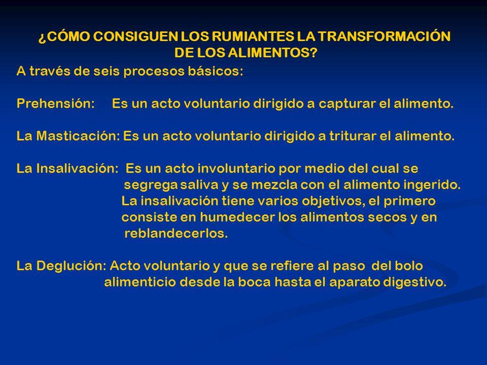 ¿CÓMO CONSIGUEN LOS RUMIANTES LA TRANSFORMACIÓN DE LOS ALIMENTOS? A través de seis procesos básicos: Prehensión: Es un acto voluntario dirigido a capt
