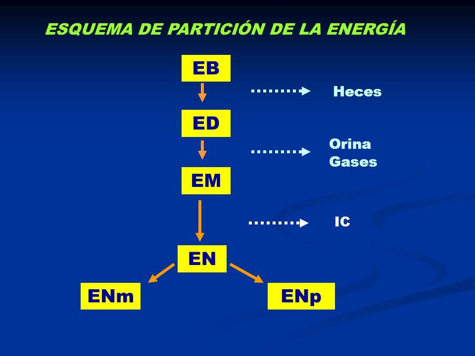 EB ED Heces EM Orina Gases ESQUEMA DE PARTICIÓN DE LA ENERGÍA EN ENpENm IC