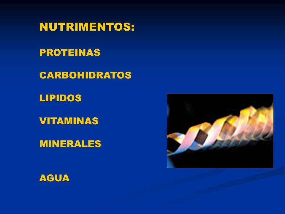Alimento Agua Materia Seca Materia Orgánica Cenizas Lignina Taninos Terpenos Etc.