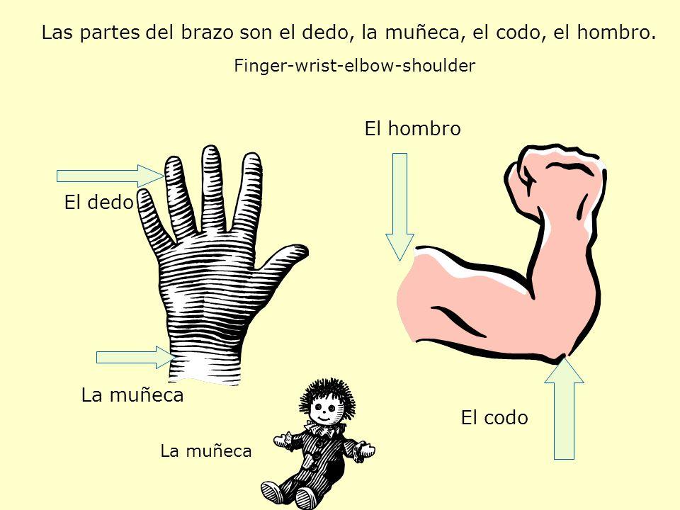 Las partes del brazo son el dedo, la muñeca, el codo, el hombro. Finger-wrist-elbow-shoulder El dedo La muñeca El codo El hombro La muñeca