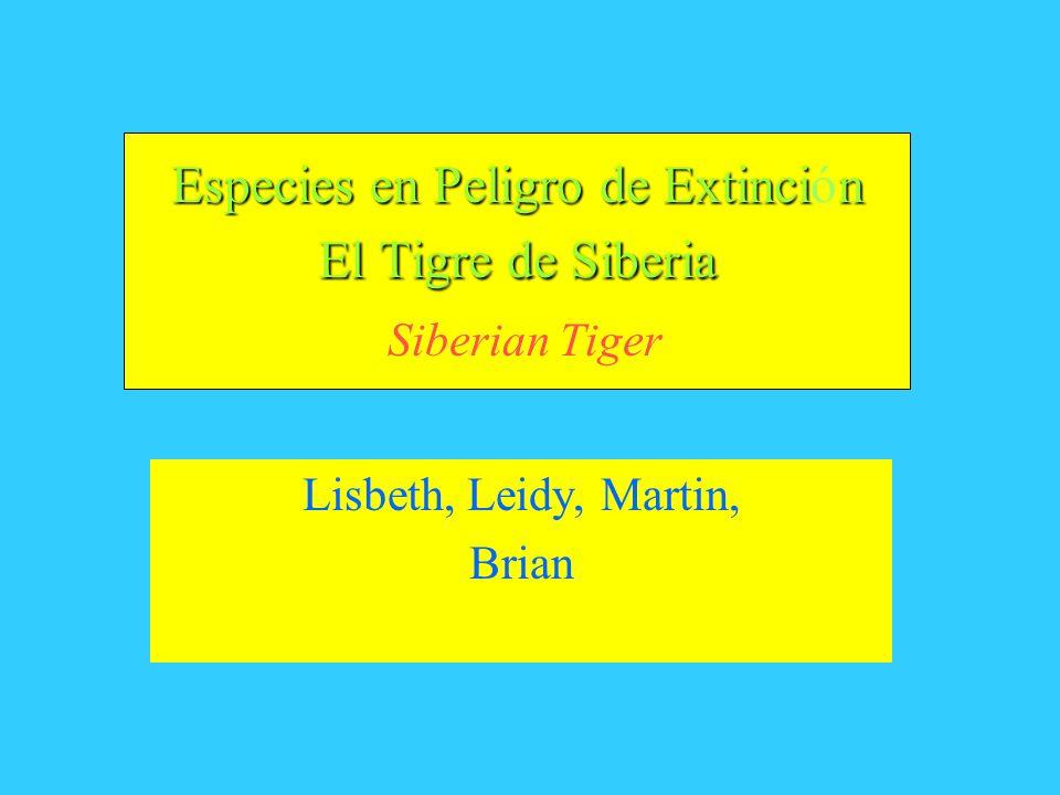 Especies en Peligro de Extincin El Tigre de Siberia Especies en Peligro de Extinción El Tigre de Siberia Siberian Tiger Lisbeth, Leidy, Martin, Brian