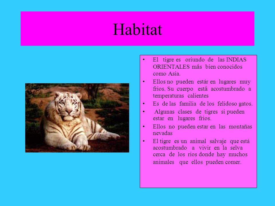 Habitat El tigre es oriundo de las INDIAS ORIENTALES m á s bien conocidos como Asia. Ellos no pueden estár en lugares muy frios. Su cuerpo est á acost