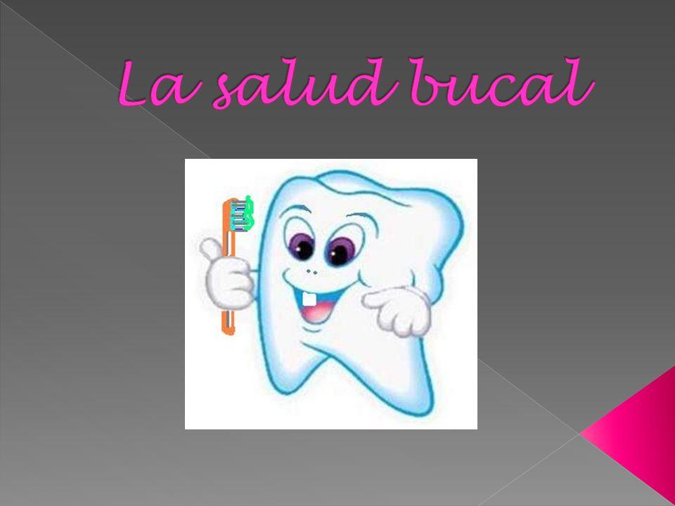 Los dientes son unas piezas duras que están incrustados en los huesos maxilares.
