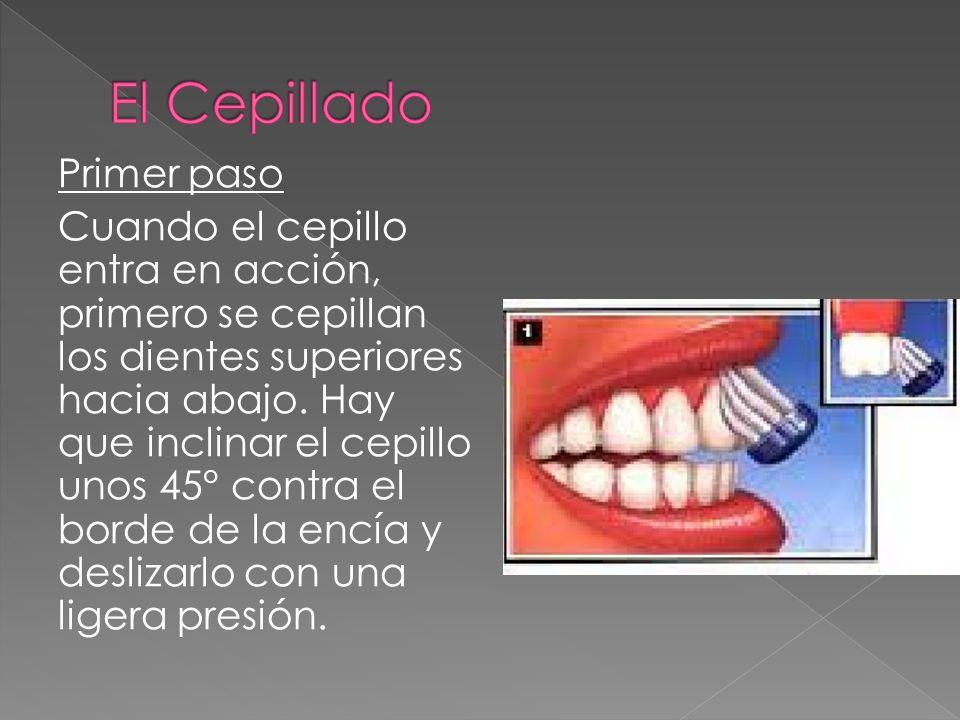 Primer paso Cuando el cepillo entra en acción, primero se cepillan los dientes superiores hacia abajo. Hay que inclinar el cepillo unos 45° contra el