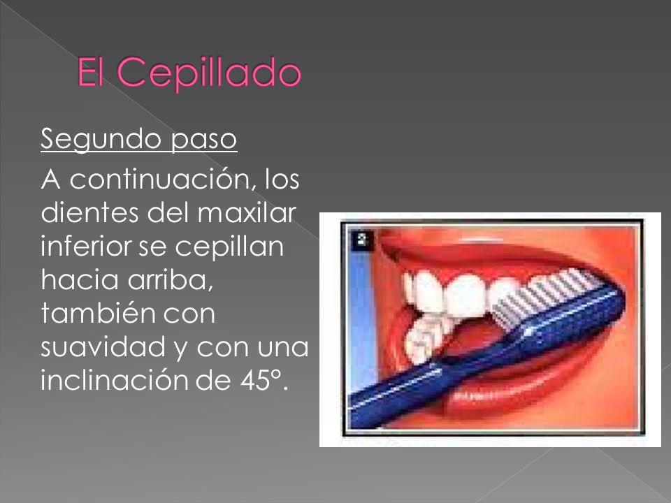Segundo paso A continuación, los dientes del maxilar inferior se cepillan hacia arriba, también con suavidad y con una inclinación de 45°.