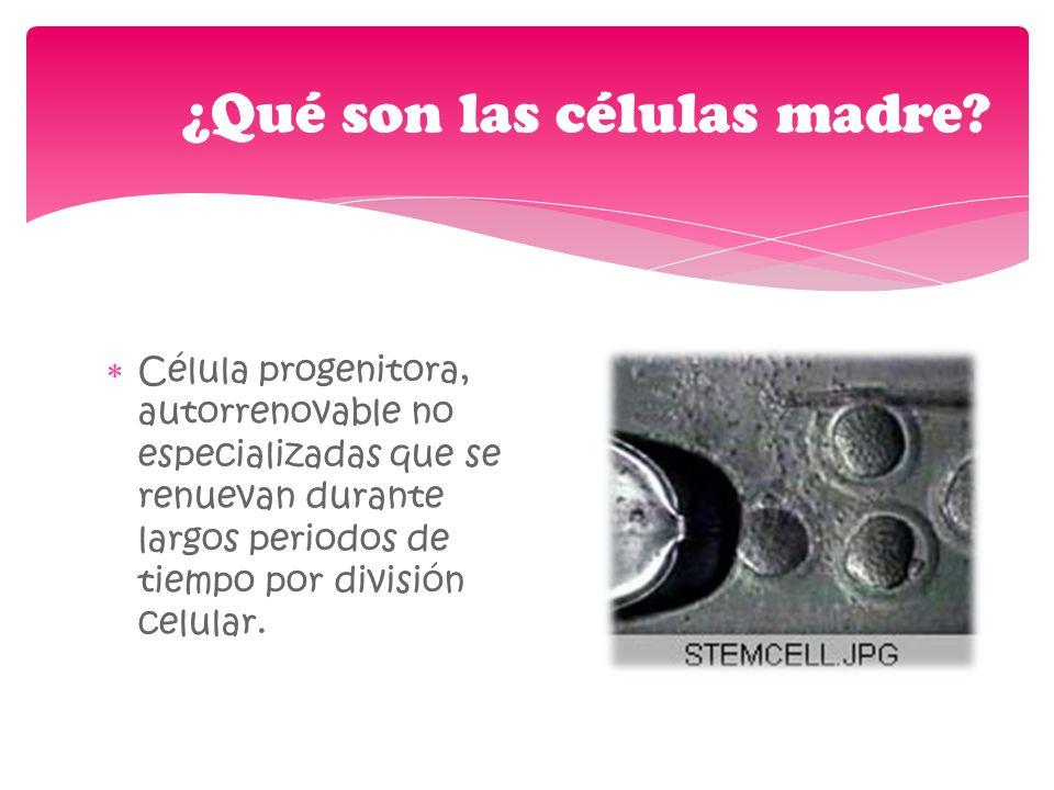 Embrionarias Derivan de la masa celular interna del embrión en estadio de blastocito (7-14 días) y son capaces de generar TODOS los diferentes tipos celulares del cuerpo, por lo que se llaman pluripotenciales.
