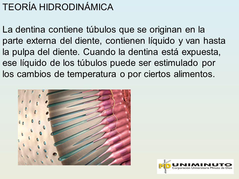 TEORÍA HIDRODINÁMICA La dentina contiene túbulos que se originan en la parte externa del diente, contienen líquido y van hasta la pulpa del diente. Cu