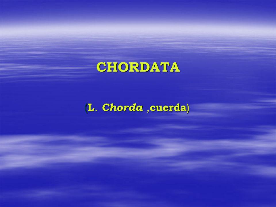 CHORDATA ( L. Chorda, cuerda )