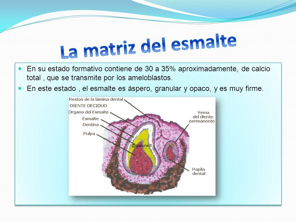 En su estado formativo contiene de 30 a 35% aproximadamente, de calcio total, que se transmite por los ameloblastos. En este estado, el esmalte es ásp