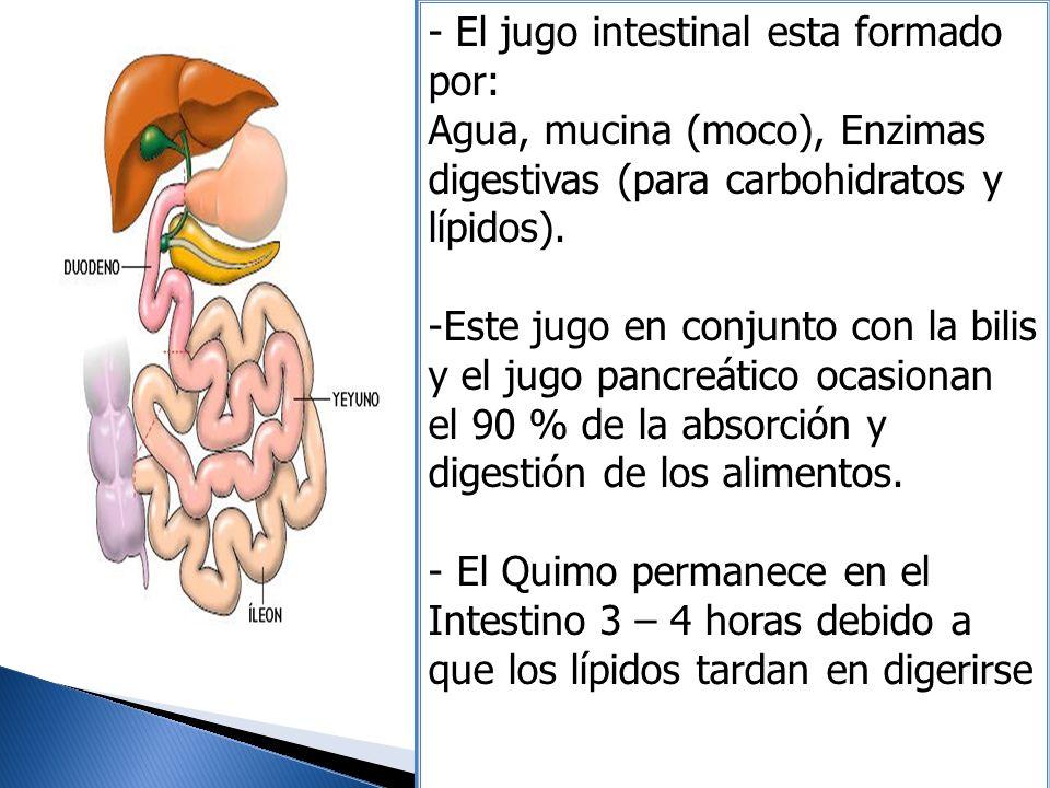 - El jugo intestinal esta formado por: Agua, mucina (moco), Enzimas digestivas (para carbohidratos y lípidos). -Este jugo en conjunto con la bilis y e