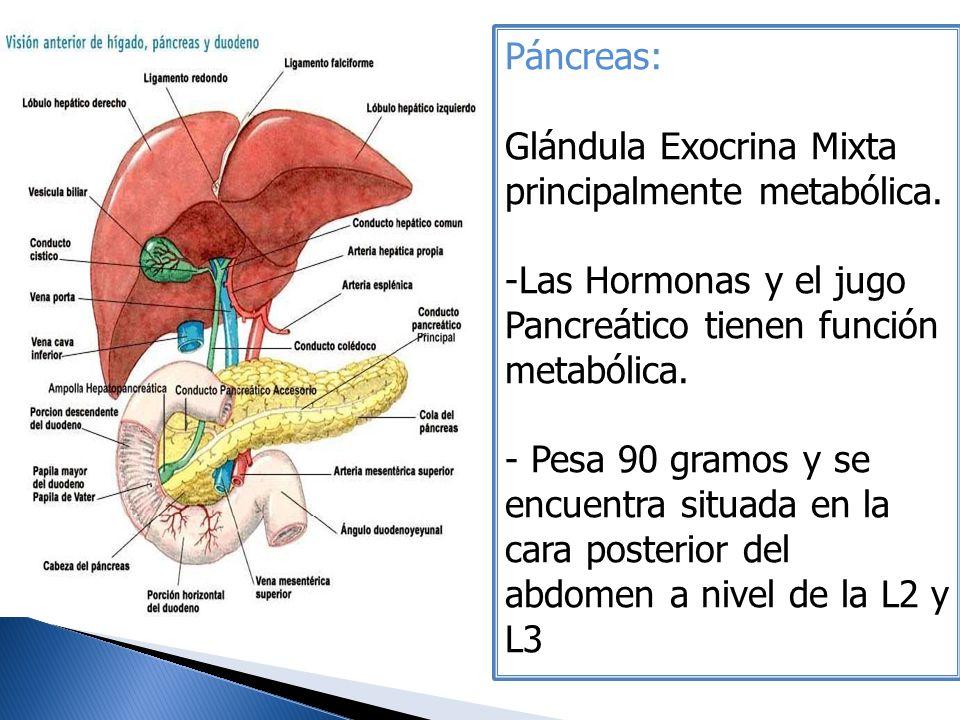 Páncreas: Glándula Exocrina Mixta principalmente metabólica. -Las Hormonas y el jugo Pancreático tienen función metabólica. - Pesa 90 gramos y se encu