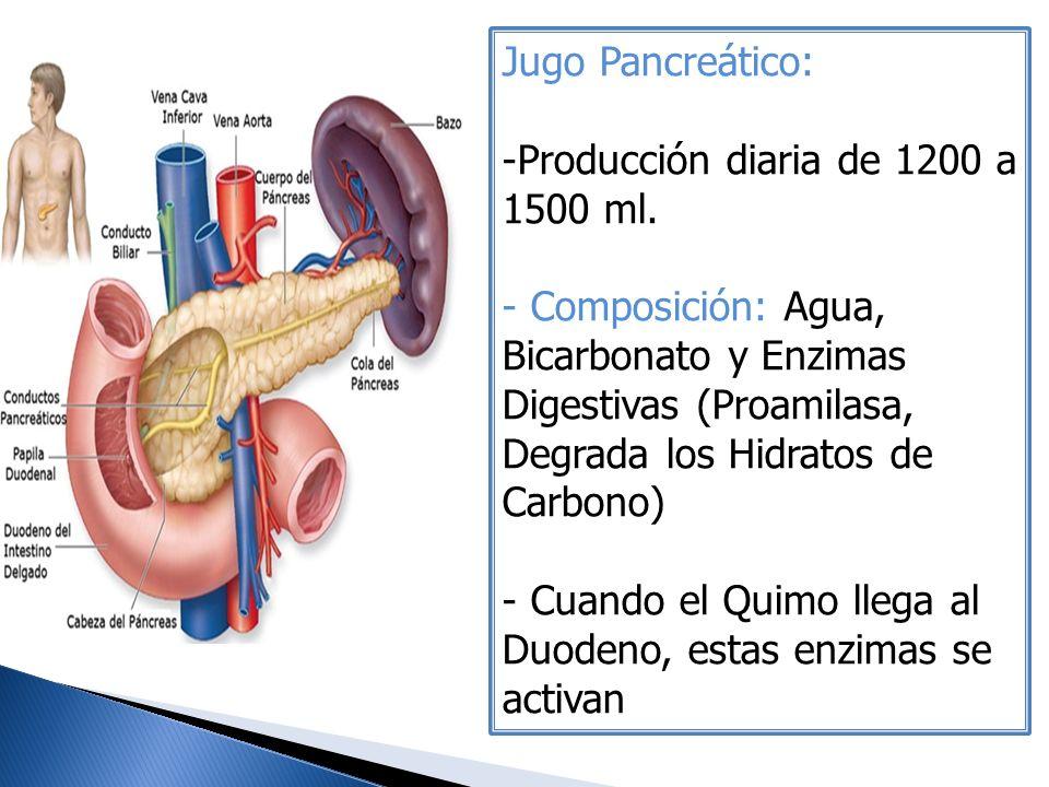 Jugo Pancreático: -Producción diaria de 1200 a 1500 ml. - Composición: Agua, Bicarbonato y Enzimas Digestivas (Proamilasa, Degrada los Hidratos de Car