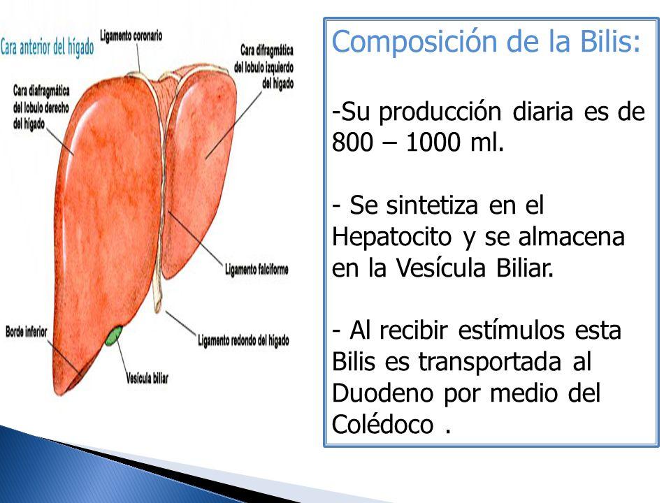 Composición de la Bilis: -Su producción diaria es de 800 – 1000 ml. - Se sintetiza en el Hepatocito y se almacena en la Vesícula Biliar. - Al recibir