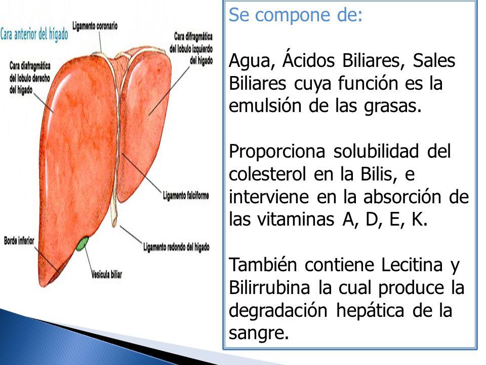 Se compone de: Agua, Ácidos Biliares, Sales Biliares cuya función es la emulsión de las grasas. Proporciona solubilidad del colesterol en la Bilis, e