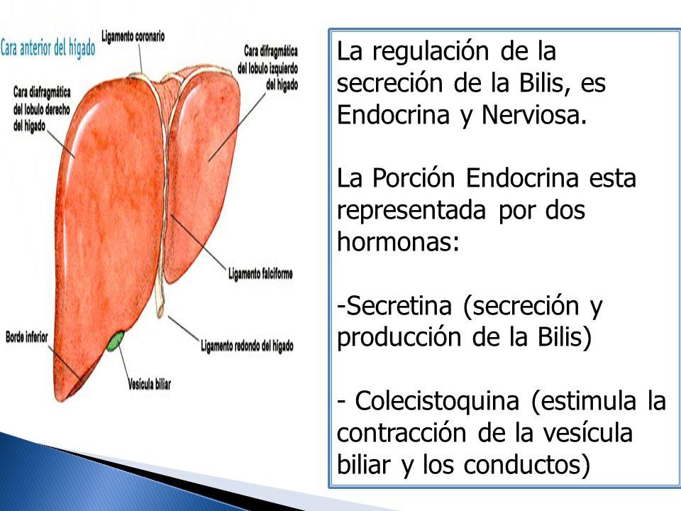 La regulación de la secreción de la Bilis, es Endocrina y Nerviosa. La Porción Endocrina esta representada por dos hormonas: -Secretina (secreción y p