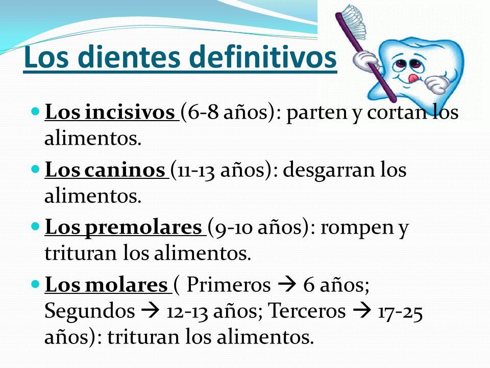 Los dientes definitivos Los incisivos (6-8 años): parten y cortan los alimentos. Los caninos (11-13 años): desgarran los alimentos. Los premolares (9-