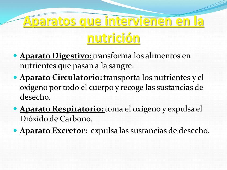 Aparatos que intervienen en la nutrición Aparato Digestivo: transforma los alimentos en nutrientes que pasan a la sangre. Aparato Circulatorio: transp