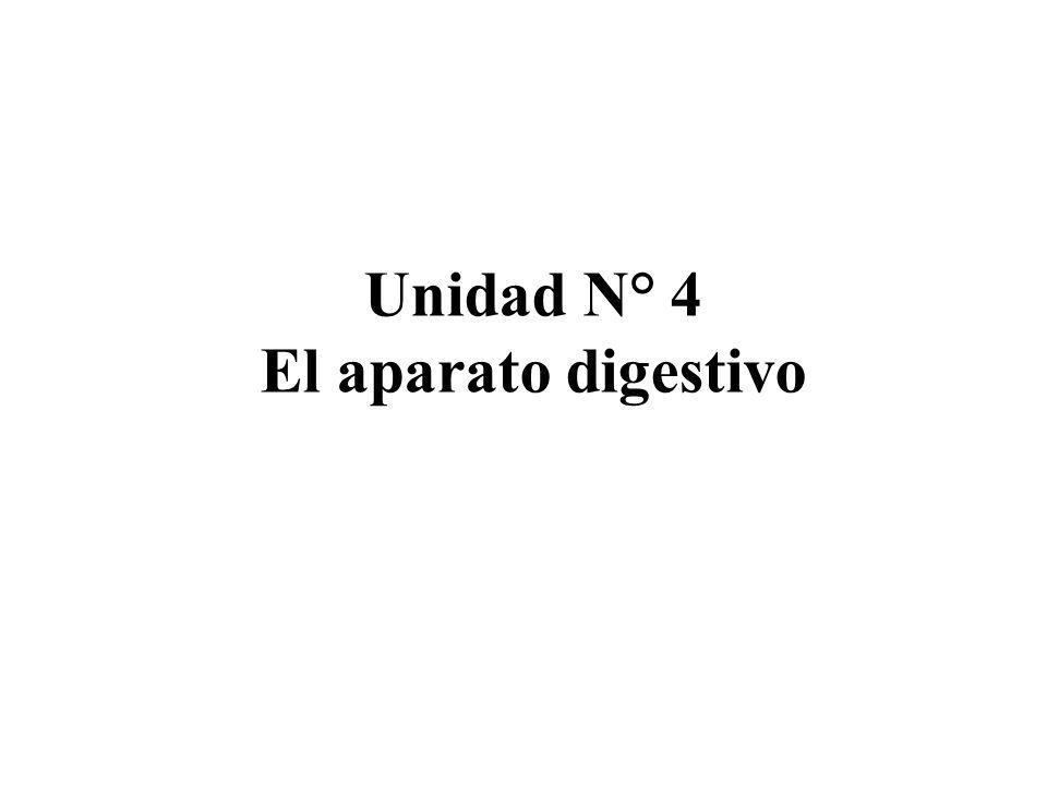 Unidad N° 4 El aparato digestivo
