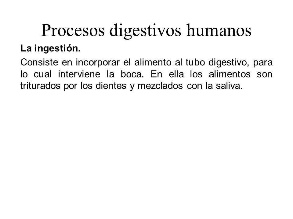 Procesos digestivos humanos La ingestión. Consiste en incorporar el alimento al tubo digestivo, para lo cual interviene la boca. En ella los alimentos