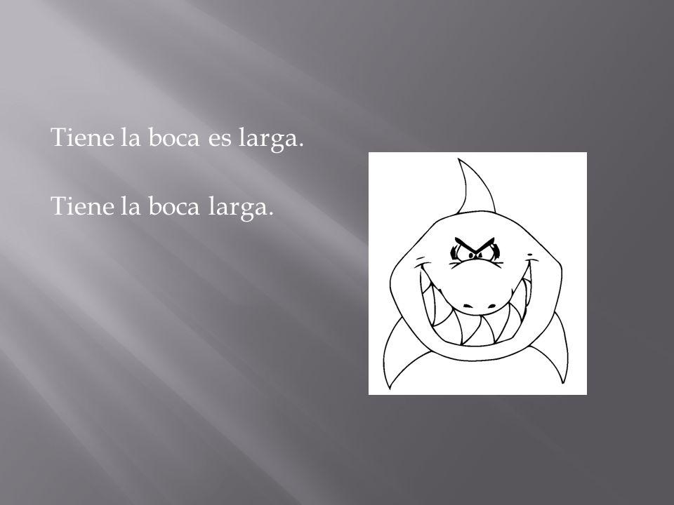 Tiene la boca es larga. Tiene la boca larga.