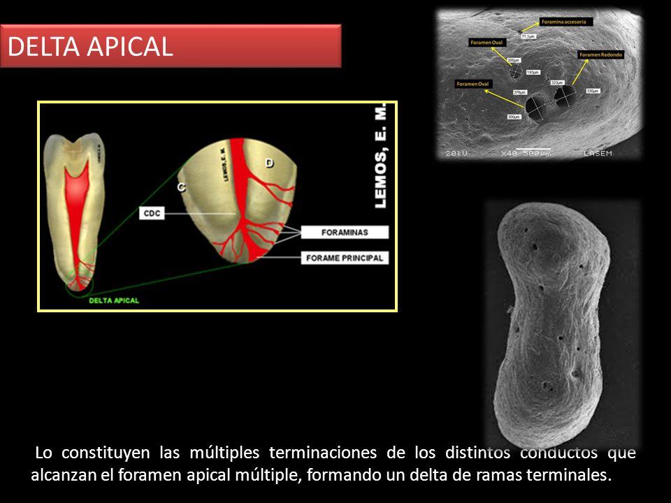Lo constituyen las múltiples terminaciones de los distintos conductos que alcanzan el foramen apical múltiple, formando un delta de ramas terminales.