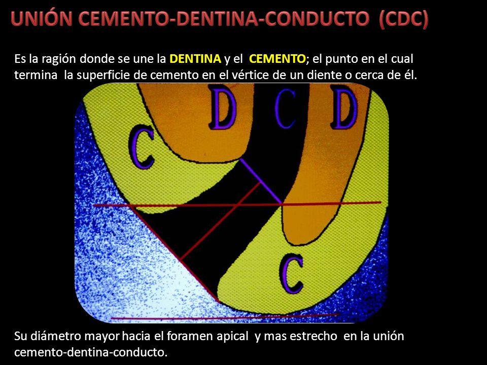 Es la ragión donde se une la DENTINA y el CEMENTO; el punto en el cual termina la superficie de cemento en el vértice de un diente o cerca de él. Su d
