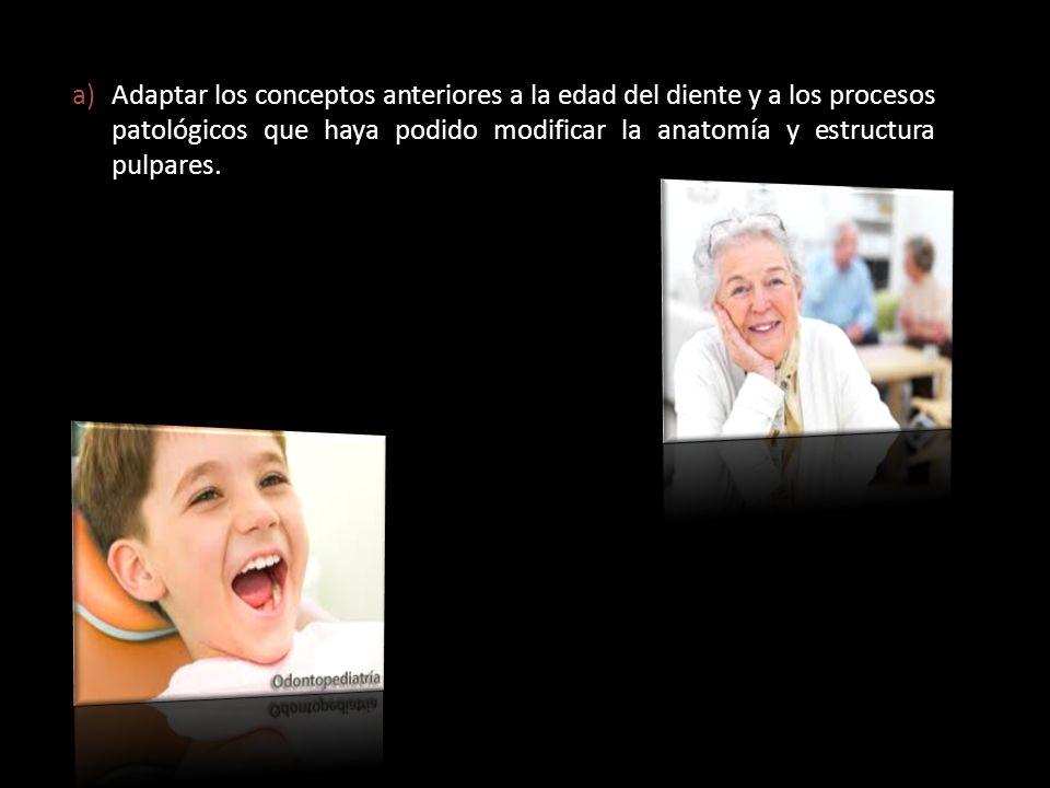 a)Adaptar los conceptos anteriores a la edad del diente y a los procesos patológicos que haya podido modificar la anatomía y estructura pulpares.