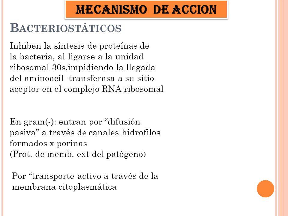 ESPECTRO DE ACCION COCOS GRAM + Stafilococus aureus Neumococos Streptococus BACILOS GRAM -Vibrio Legionella Brucellas Hemophilus influenza y Ducrey Pseudomona pseudomallei ANAEROBIOS Bacteroides fragilis Actinomyces OTROS C.