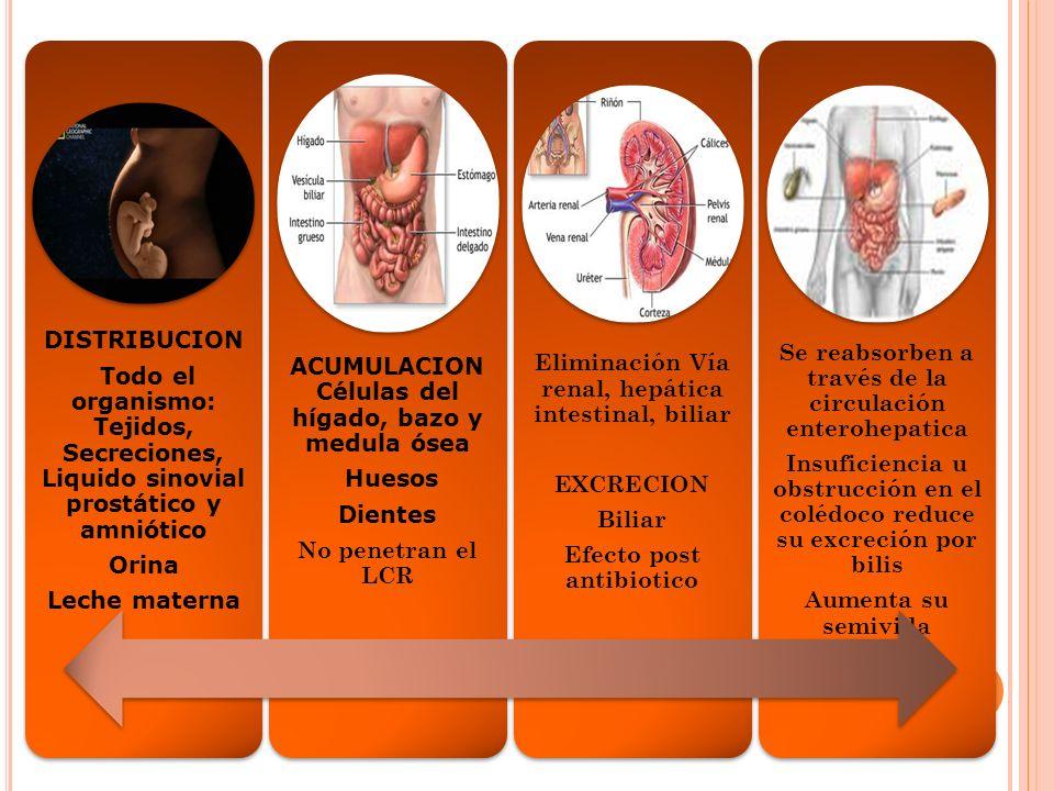 VIDA MEDIA Tetraciclina Oxicitetraciclina 6-12 h Demeclociclina 16 h Doxiciclina Minociclina 16 – 18 h