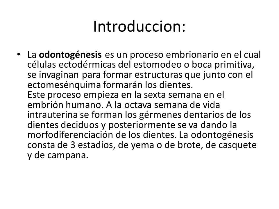 Introduccion: La odontogénesis es un proceso embrionario en el cual células ectodérmicas del estomodeo o boca primitiva, se invaginan para formar estr