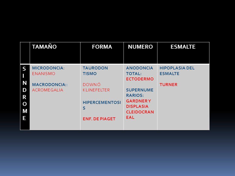 TAMAÑOFORMANUMEROESMALTE SINDROMESINDROME MICRODONCIA: ENANISMO MACRODONCIA:: ACROMEGALIA TAURODON TISMO DOWN Ó KLINEFELTER HIPERCEMENTOSI S ENF. DE P