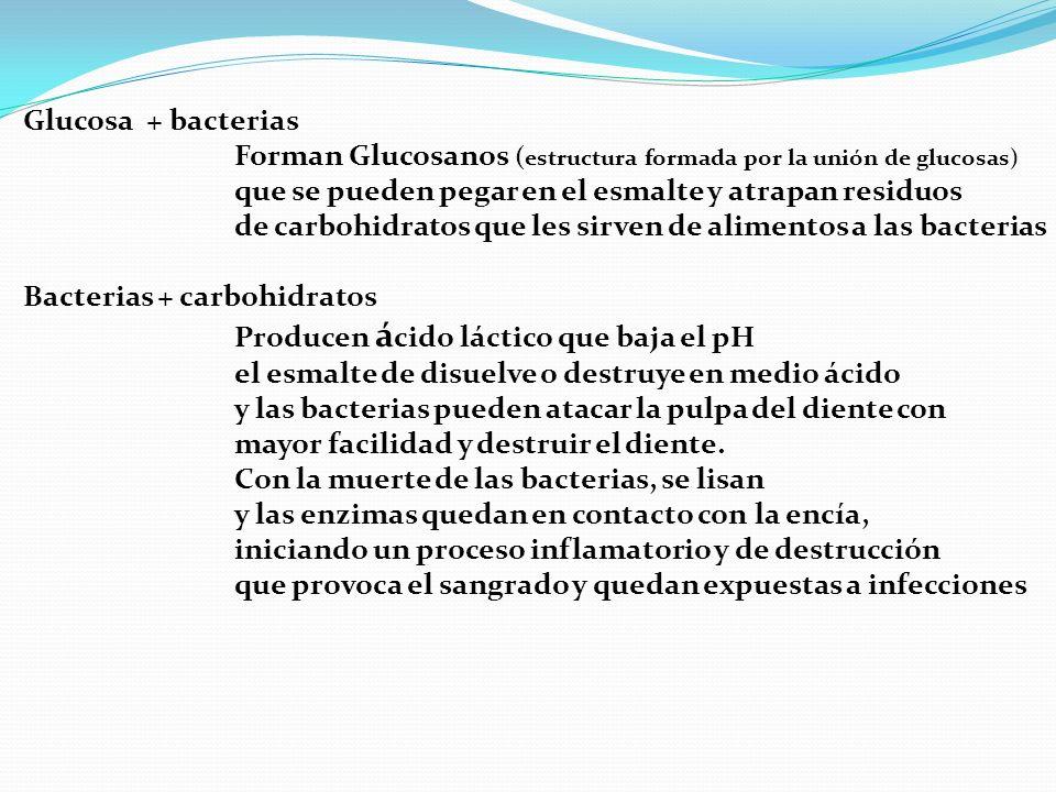 Glucosa + bacterias Forman Glucosanos ( estructura formada por la unión de glucosas) que se pueden pegar en el esmalte y atrapan residuos de carbohidr