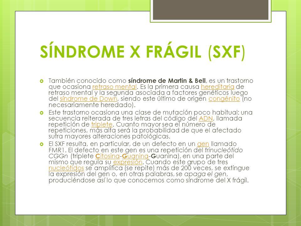 SÍNDROME X FRÁGIL ( SXF ) También conocido como síndrome de Martin & Bell, es un trastorno que ocasiona retraso mental. Es la primera causa hereditari
