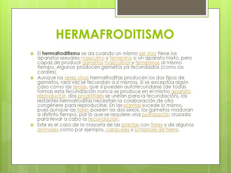 HERMAFRODITISMO El hermafroditismo se da cuando un mismo ser vivo tiene los aparatos sexuales masculino y femenino o un aparato mixto, pero capaz de p