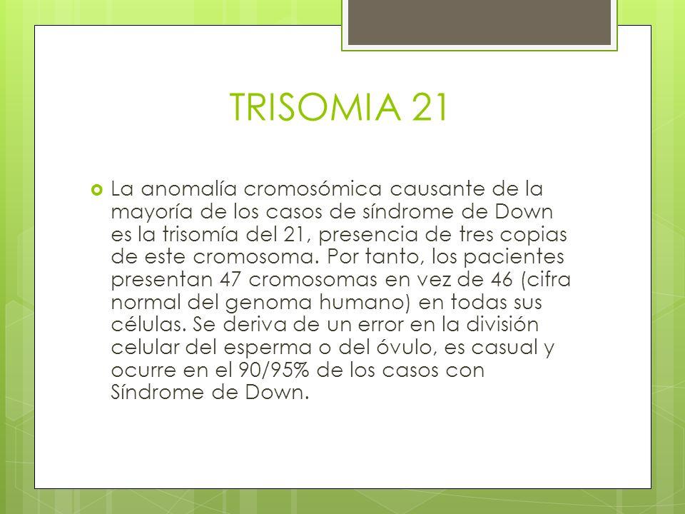 TRISOMIA 21 La anomalía cromosómica causante de la mayoría de los casos de síndrome de Down es la trisomía del 21, presencia de tres copias de este cr
