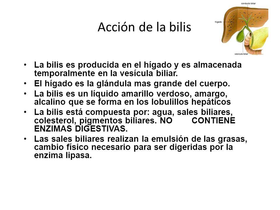 Acción de la bilis La bilis es producida en el hígado y es almacenada temporalmente en la vesícula biliar. El hígado es la glándula mas grande del cue