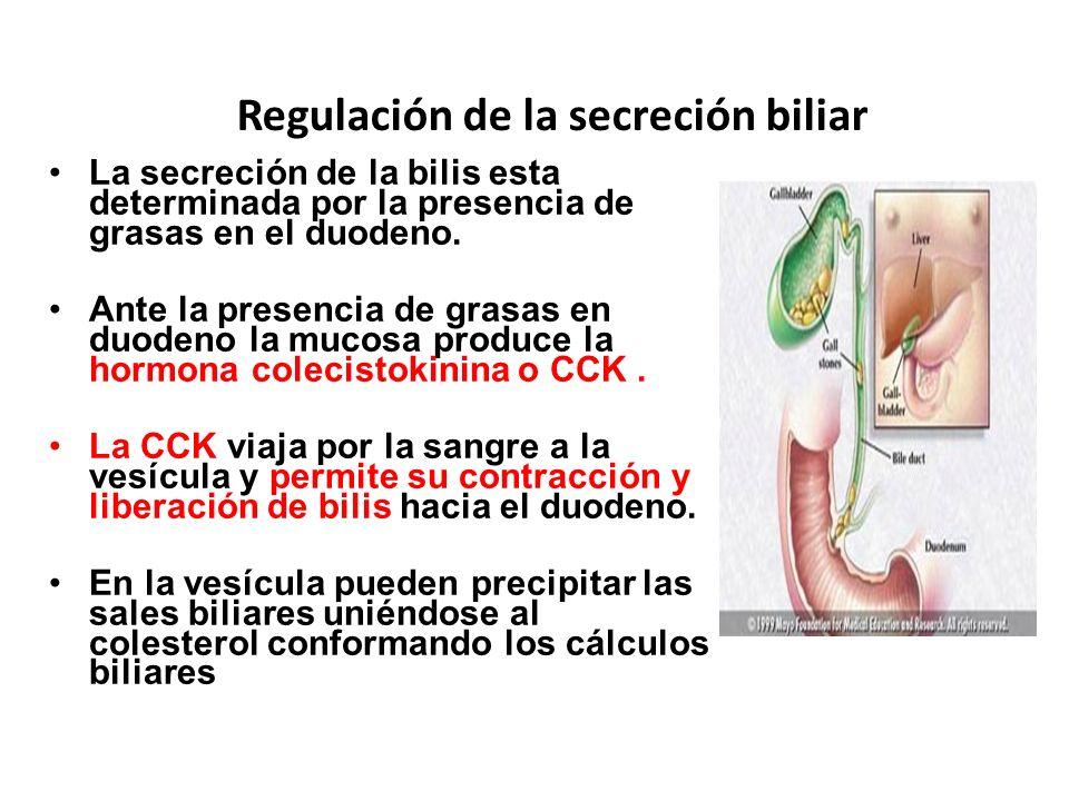 Regulación de la secreción biliar La secreción de la bilis esta determinada por la presencia de grasas en el duodeno. Ante la presencia de grasas en d