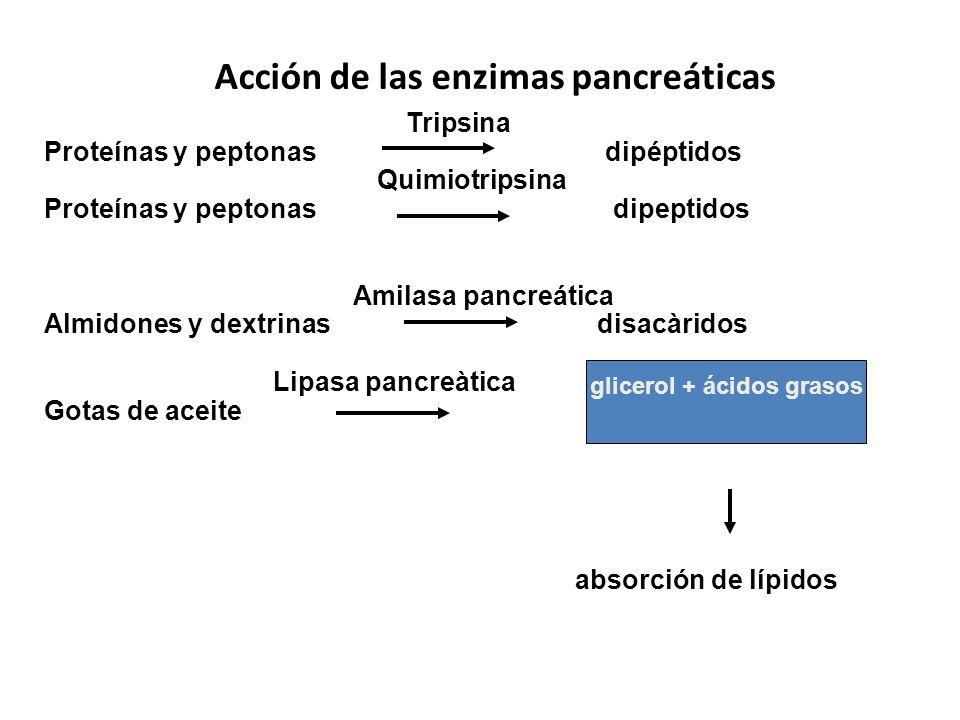 Acción de las enzimas pancreáticas Tripsina Proteínas y peptonas dipéptidos Quimiotripsina Proteínas y peptonas dipeptidos Amilasa pancreática Almidon