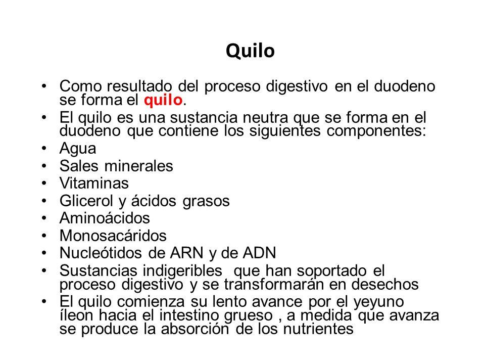 Quilo Como resultado del proceso digestivo en el duodeno se forma el quilo. El quilo es una sustancia neutra que se forma en el duodeno que contiene l