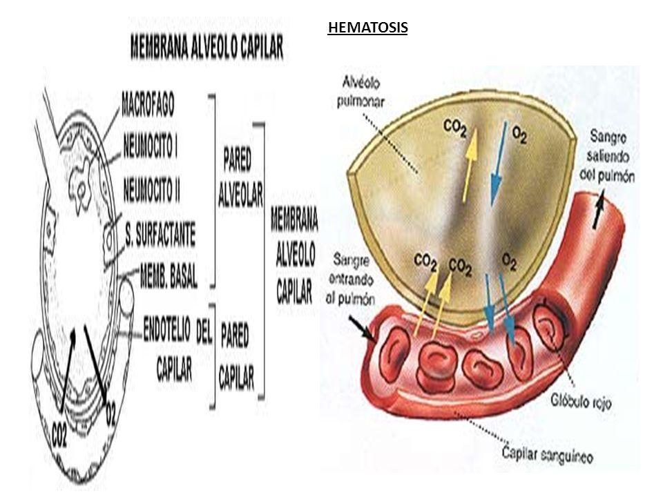 HEMATOSIS