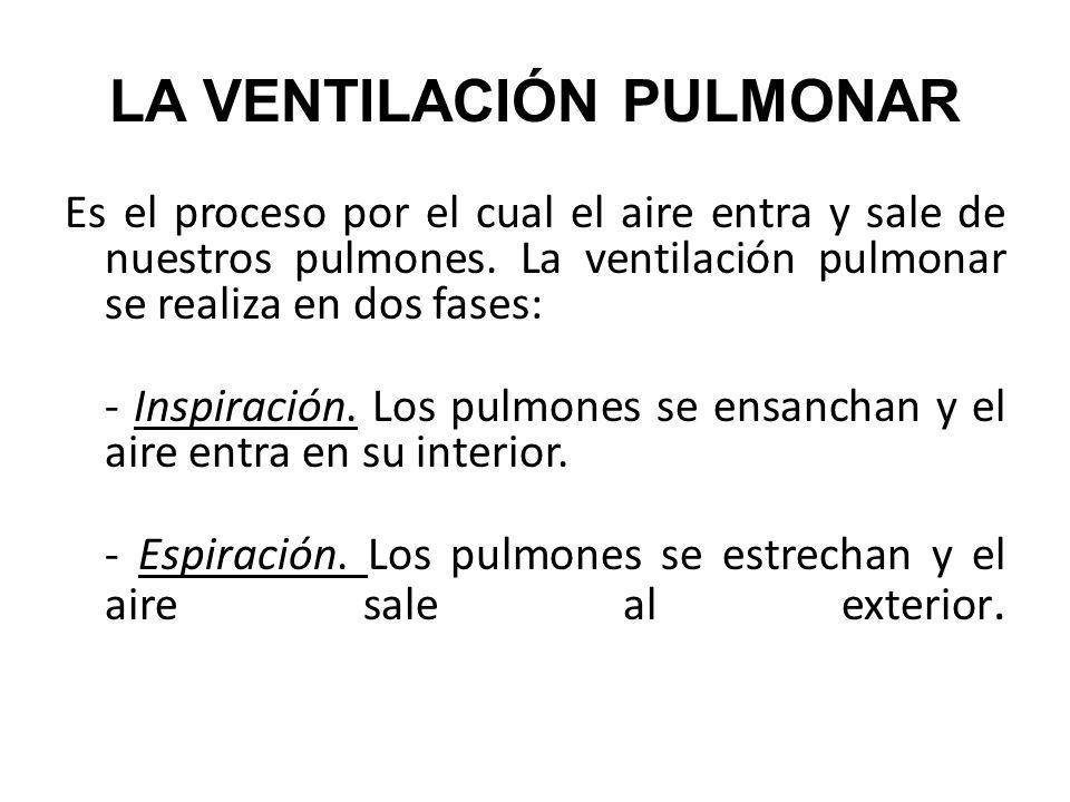 Es el proceso por el cual el aire entra y sale de nuestros pulmones. La ventilación pulmonar se realiza en dos fases: - Inspiración. Los pulmones se e