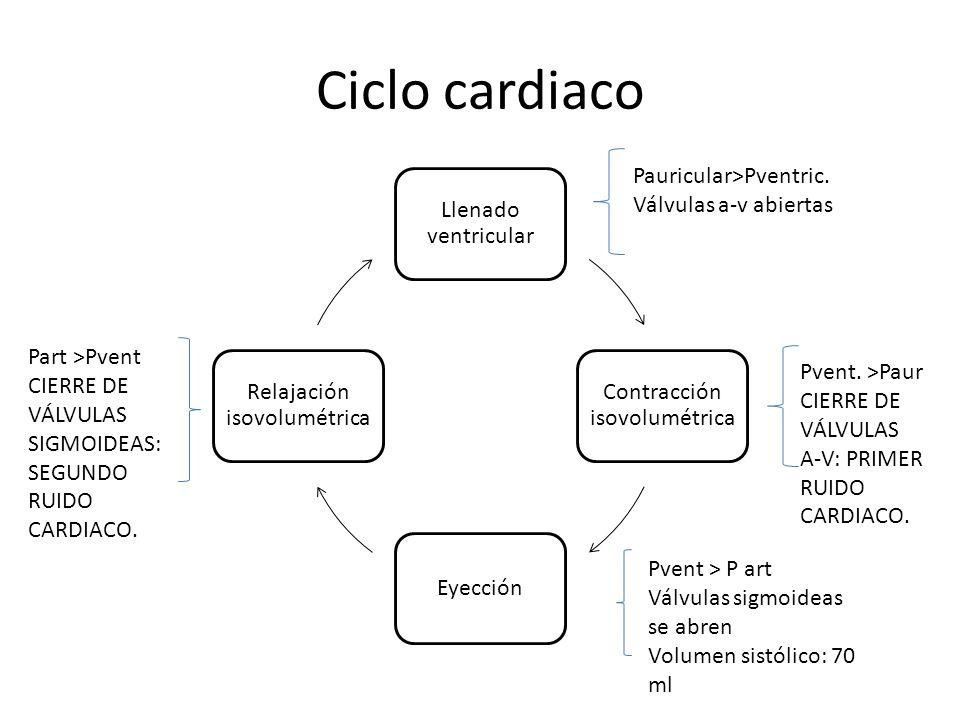 Ciclo cardiaco Llenado ventricular Contracción isovolumétrica Eyección Relajación isovolumétrica Pauricular>Pventric. Válvulas a-v abiertas Pvent. >Pa